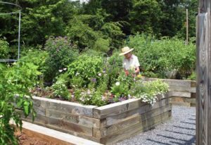 The community garden at Cypress of Charlotte.